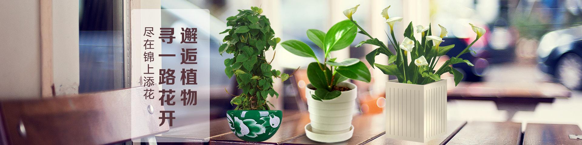 蚌埠植物购买