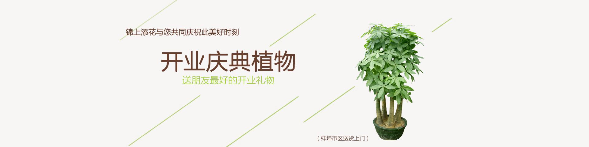 蚌埠开业植物
