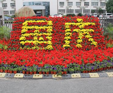 节日花卉布置