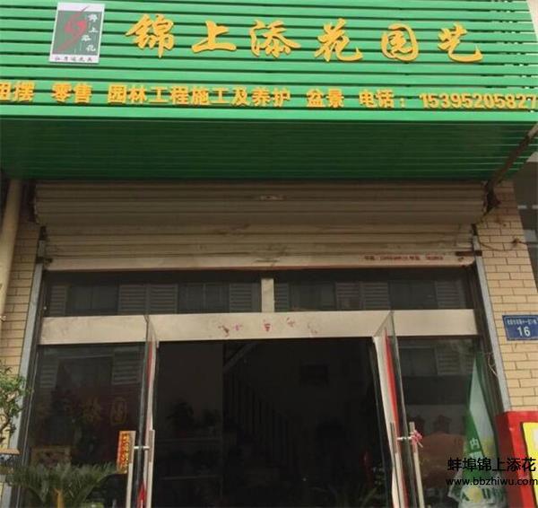 蚌埠植物零售
