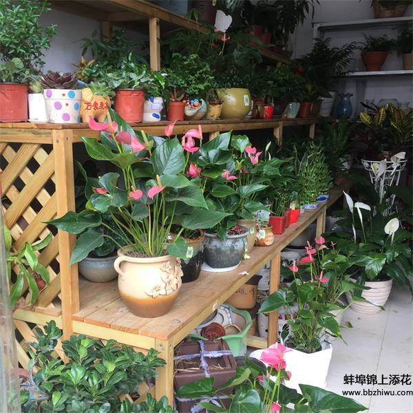 蚌埠花卉店