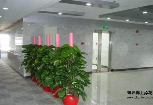 蚌埠植物租赁