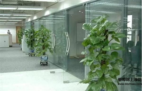 蚌埠植物租摆