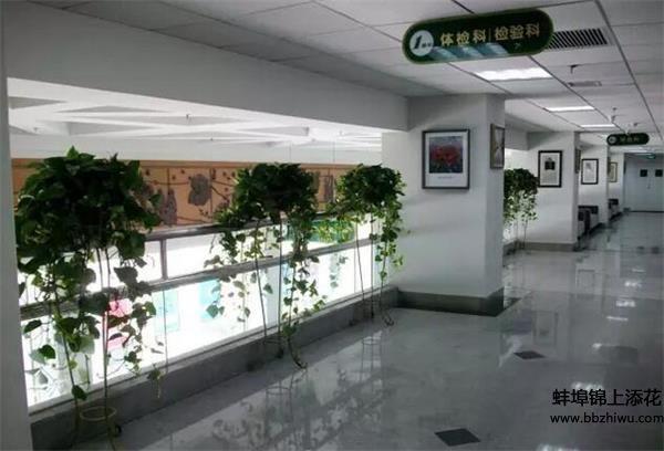 蚌埠植物出租