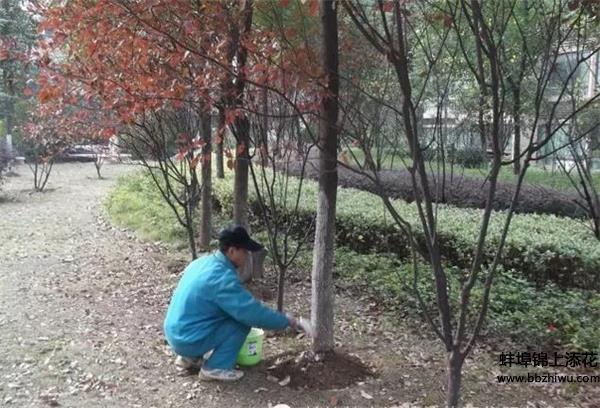 蚌埠绿植养护