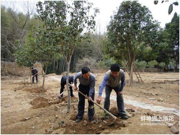 蚌埠绿化施工