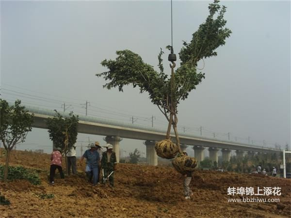 蚌埠绿化施工服务