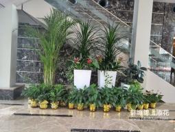 蚌埠某商场植物租赁案例