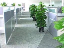蚌埠某电商公司植物租赁案例