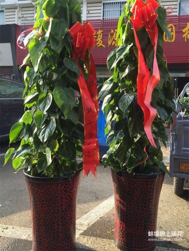 蚌埠会议植物