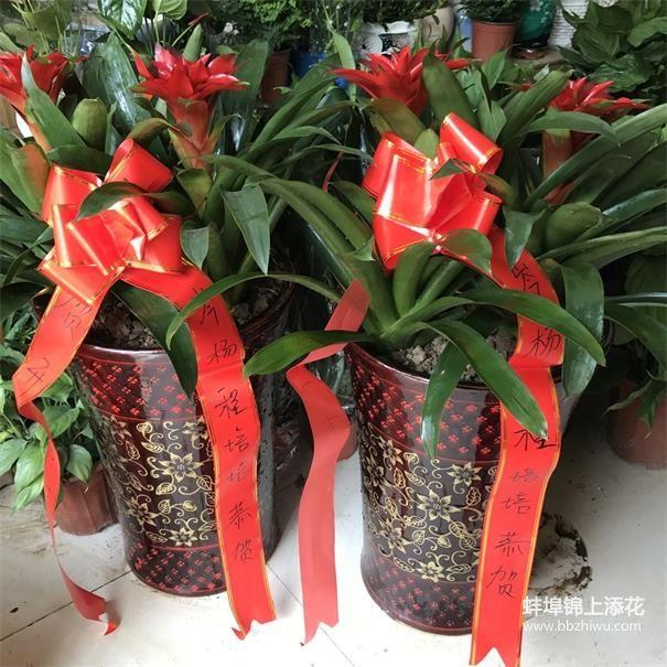 蚌埠会议绿植