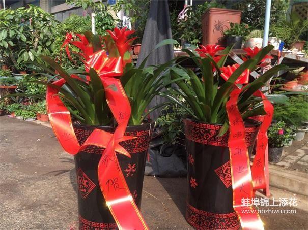 蚌埠节日绿植